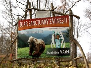 Rezervatia de Ursi de la Zarnesti