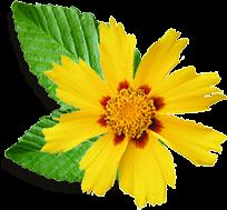 frunzafloare